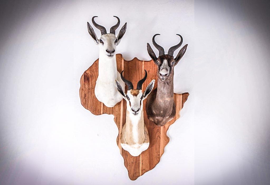 springbok_shield.jpeg