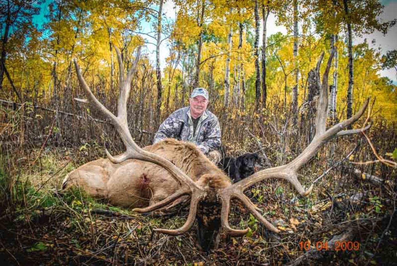 Trophy Elk 2